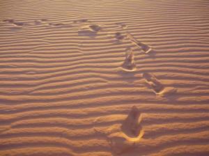 voeten-in-de-woestijn | witchwithaview
