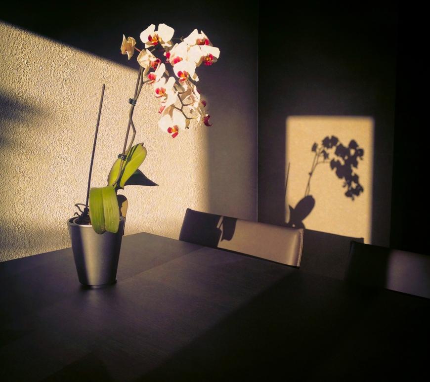orchid - still on monday