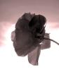 rose - weekly photo challenge