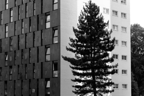 monochrome-monday-tree