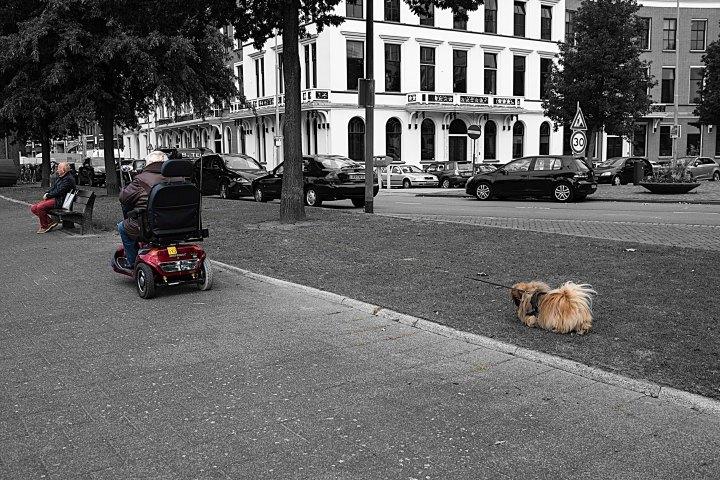 silent sunday - dog on a leash
