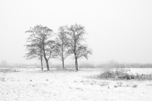 Four trees in the snow