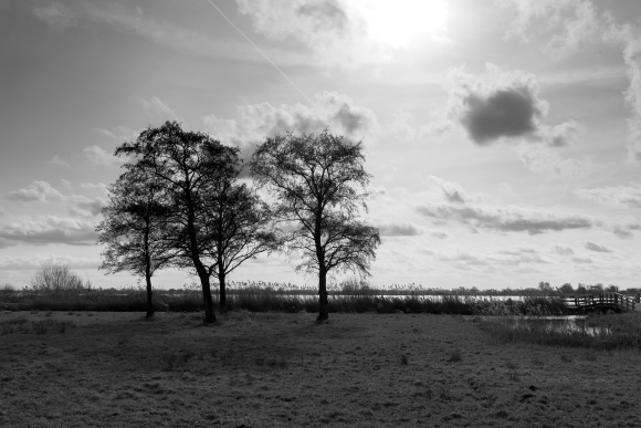 monochrome monday - four trees with backlight